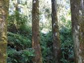宜蘭大同旗山、婆羅山:DSCN4774.JPG