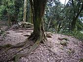 新竹關西赤柯山、赤柯山南峰、東獅頭山:IMGP6337.JPG