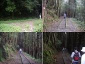 嘉義阿里山特富野古道、鹿林神木:IMGP3396-99.JPG