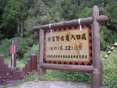 嘉義阿里山特富野古道、鹿林神木:IMGP3378.JPG