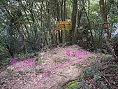 新竹關西赤柯山、赤柯山南峰、東獅頭山:IMGP6340.JPG