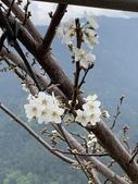 台中和平志良節山、平岩山:IMG_2735.JPG