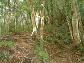 新竹尖石高台山、島田山:DSCN4852.JPG