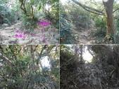 高雄鼓山內帷山、北壽山:DSCN5108B-E.JPG