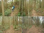 新竹尖石高台山、島田山:DSCN4828-32.JPG