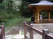 嘉義阿里山特富野古道、鹿林神木:IMGP3395.JPG