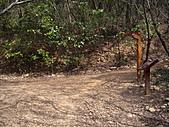台中大肚環保公園登山步道:IMGP6221.JPG