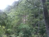 苗栗泰安雪見遊憩區、林間步道:IMG_0010.jpg