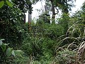 台中后里鳳凰山步道、觀音山步道:IMGP3818.JPG