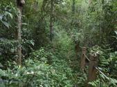 新竹北埔水磜村桐花林登山步道:DSCN3753.JPG