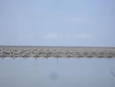 雲林口湖外傘頂洲:IMGP8192.JPG