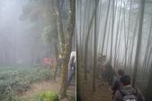 南投鹿谷樟空崙山、貓冬望山、大崙頭山、銀杏森林(羊彎上、下大石公):IMGP8926-27.JPG