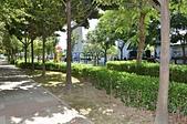 銀髮俱樂部慶揭牌 局長張錦麗同賀:光華公園樹木成蔭綠蔭廊道2.JPG