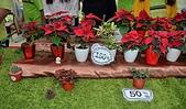 大安庇護農場週年慶 敬邀愛心點綴聖誕節:盆栽聖誕紅.jpg