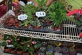 大安庇護農場週年慶 敬邀愛心點綴聖誕節:銀杏木與多葉蘭.jpg