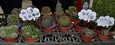 大安庇護農場週年慶 敬邀愛心點綴聖誕節:仙人長多肉植物盆栽.jpg