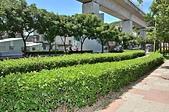 銀髮俱樂部慶揭牌 局長張錦麗同賀:高鐵橋下的光華公園經由志工們的清潔與養護成為休憩好所在.JPG