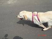 遛狗去~:快速奔跑