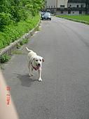 遛狗去~:還要跑喔?