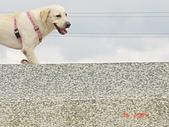 遛狗去~:河堤上跳躍的狗