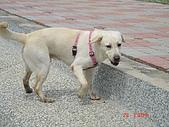 遛狗去~:回眸一笑