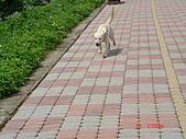 遛狗去~:等等我