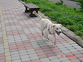 遛狗去~:跳躍的狗