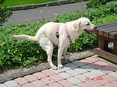 遛狗去~:我在..