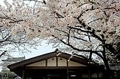 2007福岡:03京都櫻花