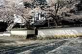 2007福岡:06京都櫻花