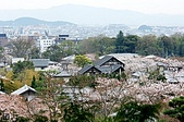 2007福岡:08京都櫻花