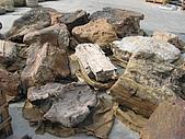 景石:小木化石.jpg
