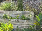 版岩系列:黃木紋530.j