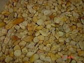 卵石:黃金石-小.JPG