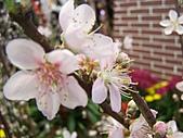 溪州花卉博覽:100_9972.JPG
