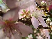溪州花卉博覽:100_9973.JPG