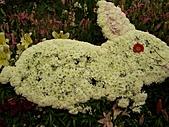 溪州花卉博覽:100_9975.JPG