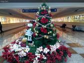 聖誕節…充滿耶誕氣氛的聖誕紅、聖誕樹 …:IMG_20151219_220825.jpg