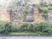 浪漫的紫藤花:照片 2300.jpg