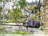 浪漫的紫藤花:照片 2305.jpg