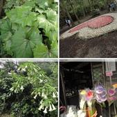 陽明山、竹子湖、碧潭一日遊…:相簿封面