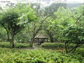 陽明山、竹子湖、碧潭一日遊…:DSC01334.JPG