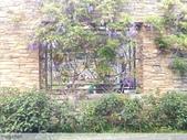 浪漫的紫藤花:照片 2324.jpg