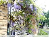 浪漫的紫藤花:照片 2306.jpg