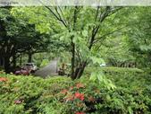 陽明山、竹子湖、碧潭一日遊…:DSC01330.JPG