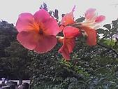 情定大飯店-華克山莊五日遊:03-08-06_1348.jpg