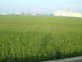 田尾公路花園單車行:DSCF0003.JPG