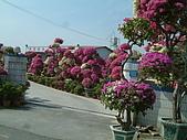 田尾公路花園單車行:DSCF0021.JPG