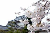 和歌山城の美:關西和歌山城天守閣の櫻