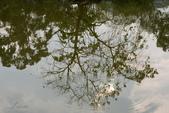 大湖公園霧之晨:DSC_3166.jpg